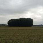 熊野古道 伊勢路の旅 八日目