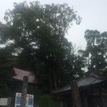 四国歩き遍路の旅 28日目